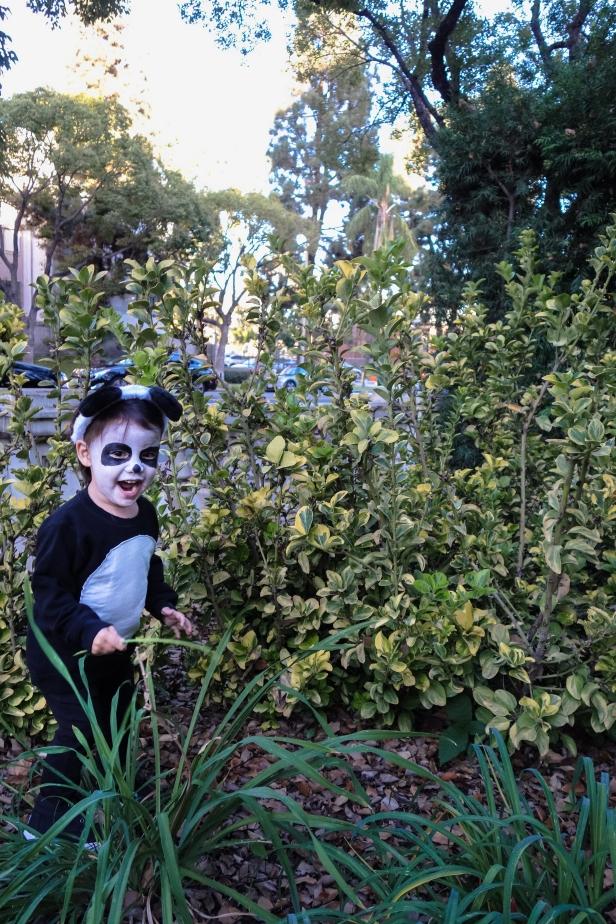 Panda (10 of 29).jpg