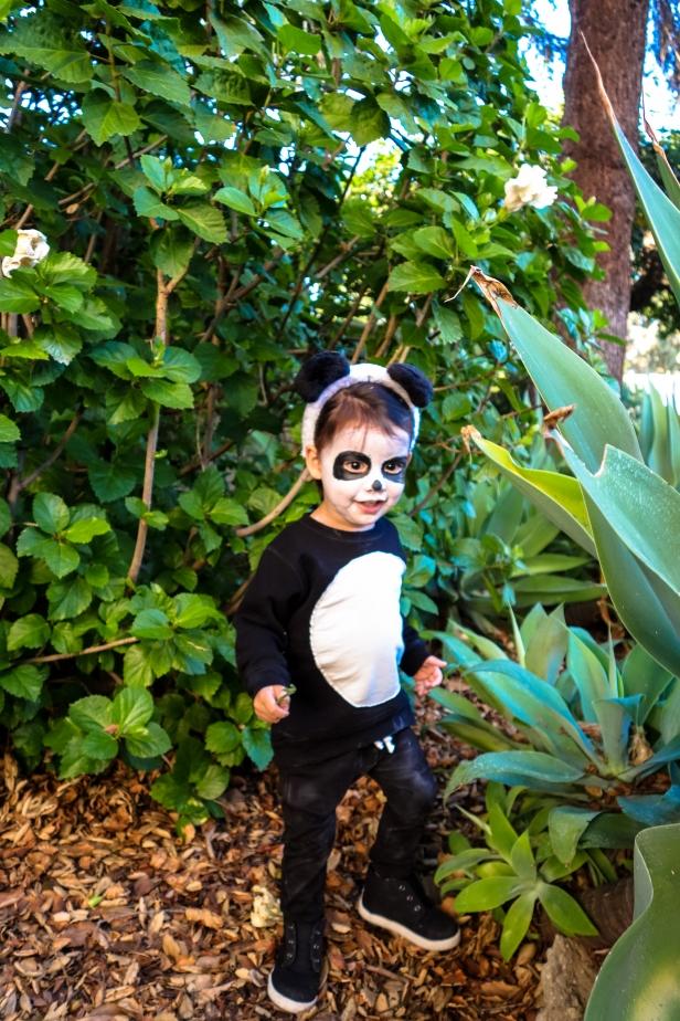 Panda (13 of 29).jpg
