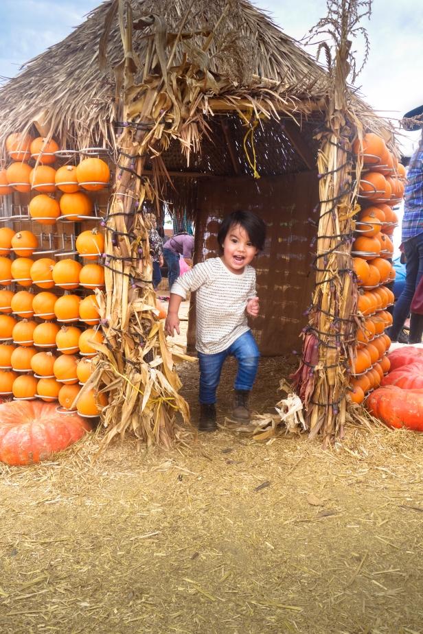 pumpkin patch (10 of 14).jpg