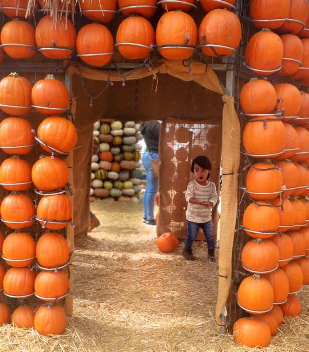 pumpkin patch (7 of 14).jpg